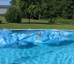 dec officer rescues hapless fawn stuck in above ground swimming pool