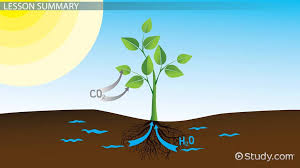 matter energy changes during photosynthesis