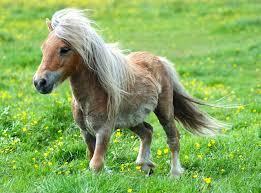beautiful baby horses wallpaper. Fine Horses Baby Horse Wallpapers  Animals On Beautiful Horses Wallpaper O