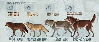 grey wolf size size comparison by aystay on deviantart