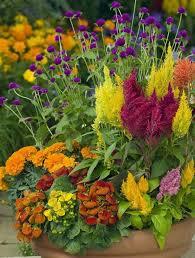 fall garden flowers. Fall2 Fall Garden Flowers Y