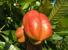 Jamaica Fruit Friends And Flowers  YouTubeJamaican Fruit Trees