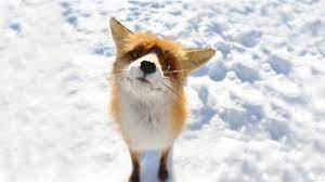 Winter Animal Wallpapers - Top Free ...