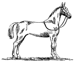 Small Picture Free Horse Coloring Pages