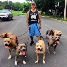 New York Bully Crew Rehabilitates Abused & Aggressive Pit Bull. -InspireMore