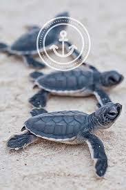 Iphone Turtle Beach Wallpaper