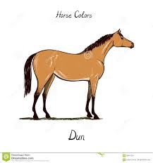 Horse Color Chart On White Equine Dun Coat Color With Text
