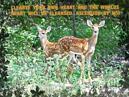 Beautiful Deer Quotes Best of 24 Amazing And Beautiful Nature Wallpapers Unique Viral