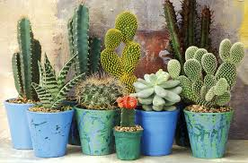 Cactus Plants 7 Things To Know About Cacti
