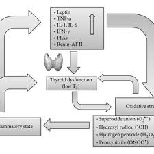 proposed model of the interrelationships between inflammation oxidative stress and thyroid derangement inflammation