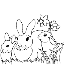 Rabbits Adult Coloring Pages