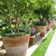 exceptionally large terracotta pots