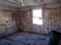 How To Get Rid Of Mold In Basement  RealEstatecomMold In Basement