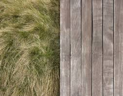 wild grass texture. Contrasting Texture Of Wooden Deck And Wild Grass Stock Photo E