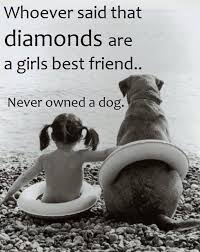 Quotes About Pets And Friendship Stunning Whoever Said Diamonds Are A Girl's Best Friend Never Had A Dog Cute