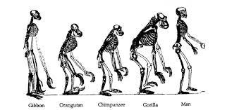 Resultado de imagen para IMAGEN LA EVOLUCION