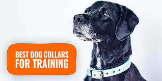 12 Best Dog Collars For Training ...