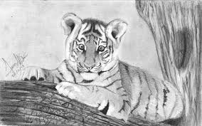 baby white tigers drawing. Simple White Baby Tiger Drawing In White Tigers T