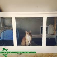 diy cat door luxury 18 best garage cat enclosure images on of 24 luxury diy