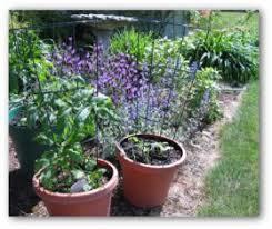 Container Garden Design Ideas Vegetable Gardening In Containers Container Garden Plans Pictures