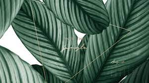 Aesthetic Wallpaper Pc Plant ...