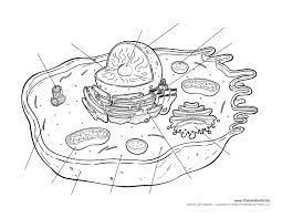 Small Picture Animal Cell Coloring Page And Coloring Page esonme