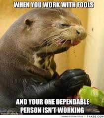 When you work with fools... - Weird Sea Otter Meme Generator ... via Relatably.com