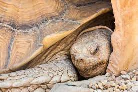 Why Pet Tortoises Die 10 Common Causes How To Prevent