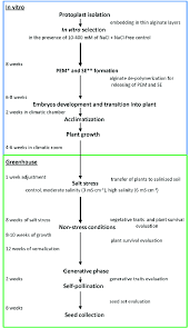 Tissue Culture Flow Chart Flow Chart Showing Subsequent Steps Of The Experiment At