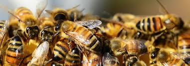 """Résultat de recherche d'images pour """"ruche kenyane"""""""