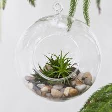 Decorative Hanging Glass Balls Beauteous 32cm32cm32cm 32cm Hanging Glass Ball PlanterAir Planter Terrarium