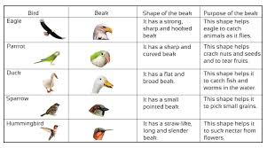 Bird Beak Chart Cbse Class 3 Science Birds And Their Features Notes And Videos