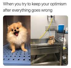 when you try to keep your optimism after everything goes wrong i redd it