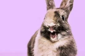 With an array of online. 300 Bunny Names The Only List Of Rabbit Names You Ll Need