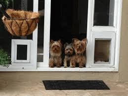 dog door gif dog door gif aluminum sliding glass doors screen