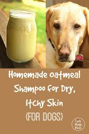 homemade shampoo for dogs for dry itchy skin