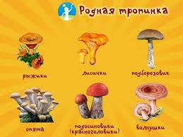 Детям о грибах грибы в сказках рассказах видео картинках и  Виды грибов Картинка для детей 1