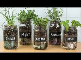 you can repurpose glass jars into adorable seed starters