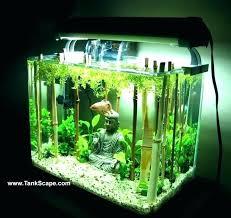 betta fish tank decor cool fish tank ideas fascinating tank decor tank my planted tank cool betta fish tank decor