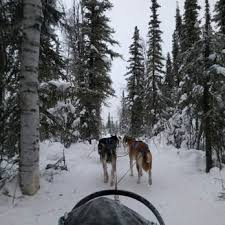 photo of sled dog adventures fairbanks ak united states amazing