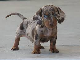 mixed breed dogs 17