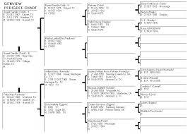 Blank Pedigree Chart Ancestry 8 Generation Ancestor Fan Ooojo Co