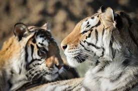 Joe Exotic: Tigers, Lies & Cover-Up roars onto the ID Channel
