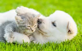 kittens and puppies. Wonderful And Playful Puppies U0026 Kittens Inside Kittens And