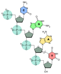 Nucleic Acid Structure Wikipedia