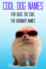 Cute Dog Quotes 94 Wonderful 24 Funny Dog Quotes With Images Good Morning Quote