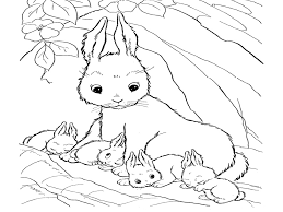 Small Picture Rabbits Coloring Pages Realistic Gekimoe 115806