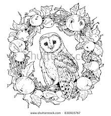 Small Picture Hand Drawn Decorative Illustration Barn Owl Stock Vector 630915767