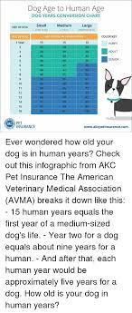 Dog Years Chart To Human Years Dog Age To Human Age Dog Years Conversion Chart Medium 21 50