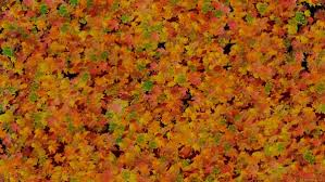 Fall Leaf Pattern Beauteous Fall Leaves Pattern Free Wallpapers By 48media